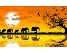 Africa wall papers : Dezign With a Z, Change the look of your rooms in a heartbeat with appealing modern wall decals. Silouette Art, New Nature Wallpaper, Images D'art, Modern Wall Decals, African Sunset, Jolie Photo, Animal Paintings, African Art, Art Pictures