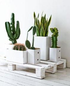 25 ideas para decorar con cactus | Decoración