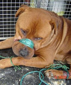 Pets Aware Pet Shop and Pet Care: Professor K9 on the gravity of animal abuse