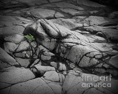 North Shore Fern - Photography by Perry Webster