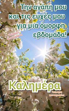 Beautiful Pink Roses, Good Week, Good Morning Good Night, Greek Quotes, Best Quotes, Beautiful Pictures, Jokes, Sayings, Mornings