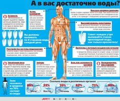 Вода: какую роль играет в организме и сколько нужно пить | Правильное питание | Здоровье | Аргументы и Факты