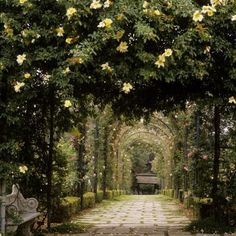Tunnel of Flowers