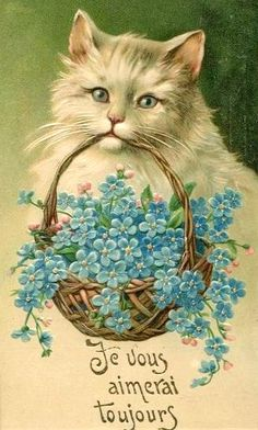 Cat and forget me nots. (I'll always love you).