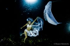 Mantas Last Dance. The time of the manta rays is over, lost to greed and exploitation by humans. Hannah is a wanderer, a sea gypsy, a manta ray reincarnate as person, lost to the world. Alone and  searching for a time long past, she gives herself up to the sea, slowly walking into the waves and drifting into the dark abyss.   In a dream-state, she awakens falling through water, bubbles and lights.   An manta glides gracefully from the darkness and approaches her, brushing close to her hand…