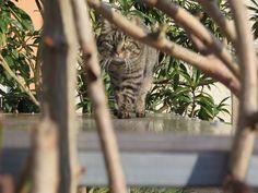 La tigre by simona cappellini