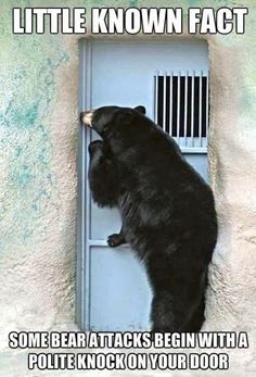Funny pictures about Some bear attacks begin with a polite knock on the door. Oh, and cool pics about Some bear attacks begin with a polite knock on the door. Also, Some bear attacks begin with a polite knock on the door photos. Funny Animal Pictures, Funny Images, Funny Photos, Funny Animals, Cute Animals, Animal Memes, Wild Animals, Funny Pix, Animal Funnies
