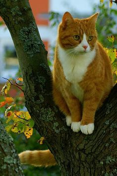 """""""No Spring nor Summer beauty hath such grace as I have seen in one Autumnal face."""" --John Donne"""