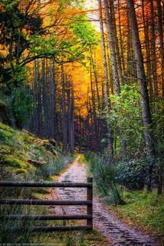 Golden Path at the Elan Valley (Rhayader, Wales, UK) by Joe Daniel Price