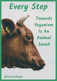 Never forget this! ⚠ If going vegan seems daunting to you and you have no idea where to start, just remember. ⬇ ANY STEP AT ALL HELPS. Vegan Memes, Vegan Quotes, Benefits Of Going Vegan, Vegetarian Lifestyle, Vegan Vegetarian, Why Vegan, Vegan Raw, You Have No Idea, Vegan Beauty