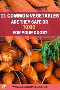 Learn what vegetables dogs can eat, and which can be poisonous. Some that humans consider healthy can be deadly for your pet. Dogs Eating Grass, Dog Eating, Low Calorie Vegetables, Boiled Vegetables, Steamed Asparagus, Cat Nutrition, Can Dogs Eat, Dog Safety