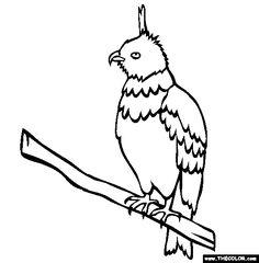 javan hawk eagle online coloring page