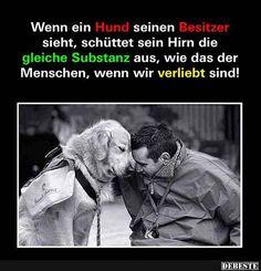 Wenn ein Hund seinen Besitzer sieht..   DEBESTE.de, Lustige Bilder, Sprüche, Witze und Videos
