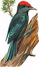 Картинки для игр и творчества Animal Stencil, Birds 2, Bird Prints, String Art, Bird Art, Bird Feathers, Coloring Pages, Art Drawings, Mandala