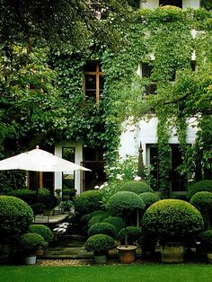 Topiaries.  So private -- adore it                                                                                                                                                                                 More