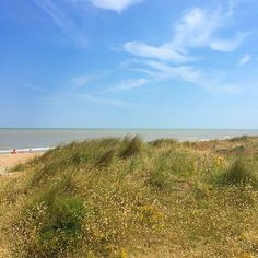 The dunes at #Greatstone #beach #sunseasand #sunny #skyporn #flowers #dungeness