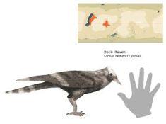 Rock Raven by PLASTOSPLEEN