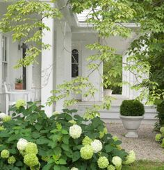 Charming white porch, white hydrangeas, boxwood, gravel