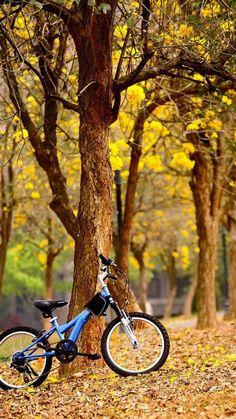 New nature wallpaper ipad spaces Ideas Blur Image Background, Desktop Background Pictures, Blur Background Photography, Studio Background Images, Light Background Images, Picsart Background, Iphone 5s Wallpaper, Nature Wallpaper, Mobile Wallpaper