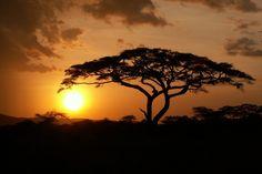 Výsledok vyhľadávania obrázkov pre dopyt stromy v afrike Celestial, Sunset, Outdoor, Instagram, Posts, Africa, Outdoors, Sunsets, Outdoor Games