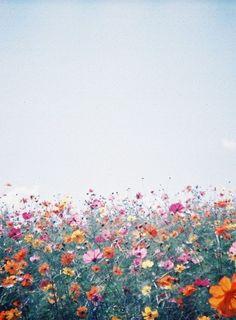 spring   field of wild flowers