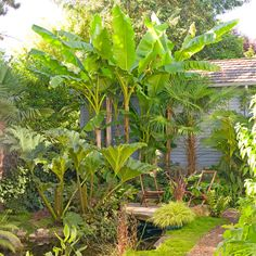 Tropical Plants in Cold-Climate Gardens