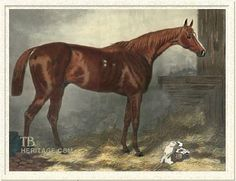 Doncaster, Tapit's fifteenth generation sire. An Epsom Derby winner who sired Epsom Derby winner Bend Or. He was the son of Stockwell and out of the mare Marigold by Teddington.