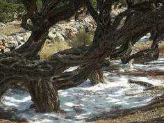 Mastic tree