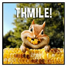Corny squirrel bright smiles for Thanksgiving Cute Funny Animals, Funny Animal Pictures, Funny Cute, Cute Pictures, Animal Pics, Funny Squirrel Pictures, Funny Owls, Senior Pictures, Funny Images