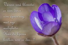 #blåveis Vårens blomster er små dører.  Fra https://www.facebook.com/bilderfrahjertet