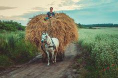 В далеком детстве ездили сверху сена, только в арбу были запряжены волы... И двигались они медленно, раскачивая стог, на котором мы сидели в душистом сене... Idyllic Ukraine