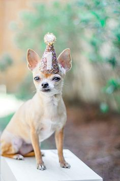Dog Party Hat || Cat Hat || Animal Hat Dog Crown || Busters Party Shop || Birthday Crown || Party Supplies