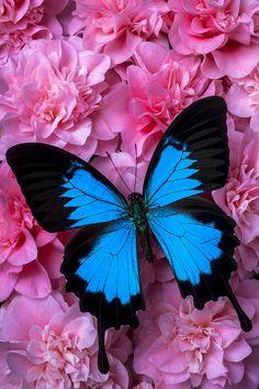 Cutting Butterflies                                                                                                                                                                                 More