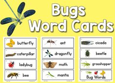 Printable picture-word cards for your Writing Center, Picture Dictionaries, or Word Wall. Preschool Word Walls, Preschool Writing, Preschool Themes, Preschool Science, Preschool Printables, Insect Activities, Pictures Of Insects, Insect Crafts, Creative Curriculum