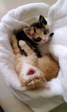 Cutest Kitten Photo Progression Ever
