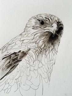 Photorealistic pencil drawing raptor