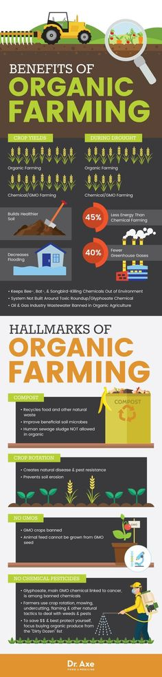 Organic Farming: 5 Major Benefits (Plus, Can It Really Feed the World?) Organic Farming: 5 Major Benefits (Plus, Can It Really Feed the World?) Did you know it's possible to produce healthy crops without the use of preservatives, radiation, genetic modifi What Is Organic Farming, Benefits Of Organic Farming, Organic Soil, Organic Gardening, Gardening Tips, Urban Gardening, Crop Production, Crop Rotation, Organic Living