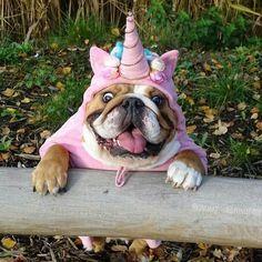 I'm a unicorn!!