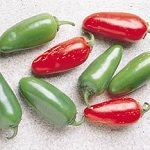 "Jalapeno Pepper - Medium sazed chili pepper 2-3 1/2"" long fruit  that are usually picked & consumed while still green but occasionally allowed to fully ripen and turn crimson red.  Used primarily in salsas, stuffed or pickled. Also, delicious consumed fresh or roasted."