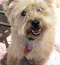 Col. Potter Cairn Rescue Network: Former foster Nala.