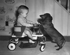 Vintage doxie with baby