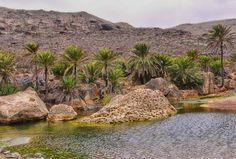 Explore Socotra Island through 7 Spectacular Photos | InspireLifeTime