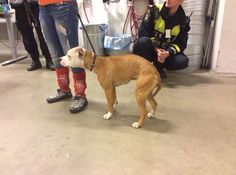 "Photo: ""Importhund"" efter 36h transport genom Europa."