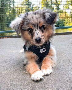 Super Cute Puppies, Baby Animals Super Cute, Cute Baby Dogs, Cute Little Puppies, Cute Dogs And Puppies, Cute Funny Animals, Doggies, Adorable Dogs, Cute Pups