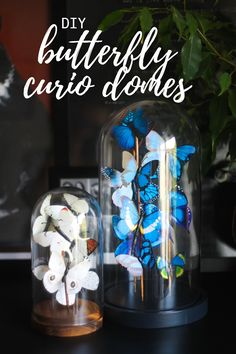 DIY butterfly curio domes bell jar Cityscape Bliss // Creative home & DIY faux taxidermy vintage antique decoration home decor