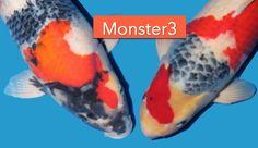 2 Monsters van Monster 3 - http://koiquestion.com/nl/2016/12/14/2-monsters-monster-3/ #Dainichi, #Deshimakoi, #Monster3, #Showa