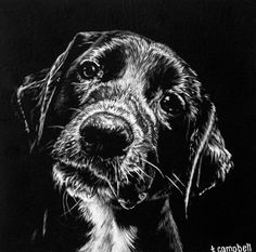 Black Paper Drawing, Black And White Drawing, White Art, Animal Paintings, Animal Drawings, Art Drawings, Scratchboard Art, Prismacolor, Scratch Art