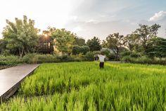 Ming Mongkol Park Landscape Design by L49