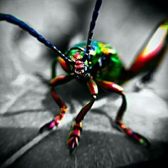 #green #black #monocrome #bug #insect #unknown #indonesia