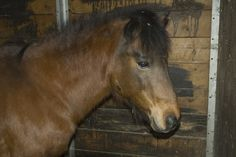 Intestinal Fortitude:  In which I try to honour the life of Trouble the Wunderpony.